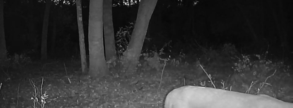 Refuge Deer Video