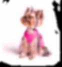 Cachorro-topo-min.png