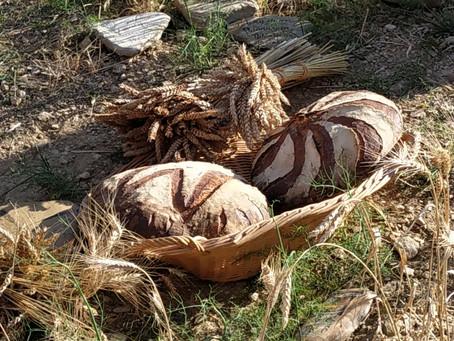 De la farine et du pain d'exception à Cucugnan