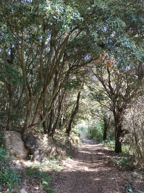 Sentier enchanté