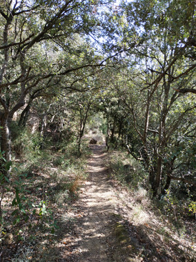 Chemin des Elphes