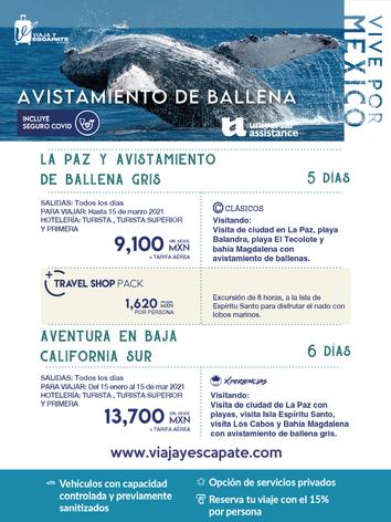 AVISTAMIENTO DE BALLENA