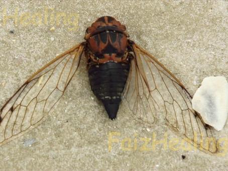 Locust Song