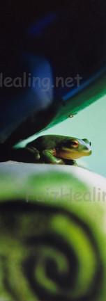 Fairytale Frog