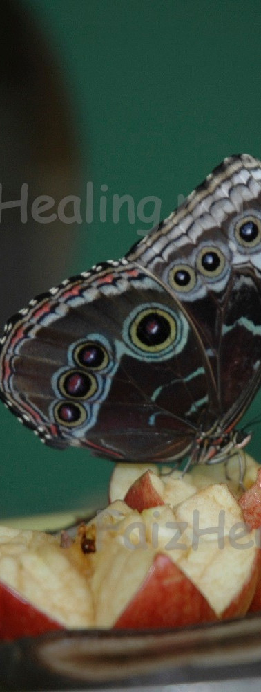 Nectar of Life 2