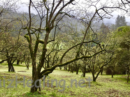 Wisdom from the Orchard