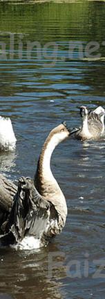 Avian Dance