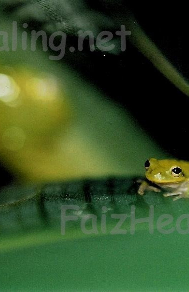 Frog Haven