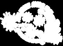 Dance Starz Logo-13.png