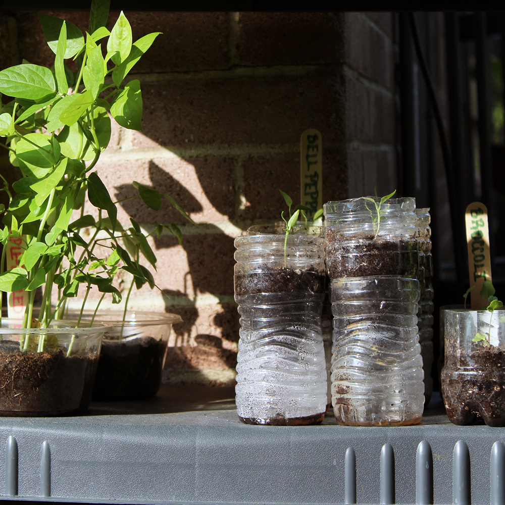 A Sustainable Way to Use Plastics in Your Garden