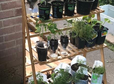 5 Tips for Starting Your New Garden