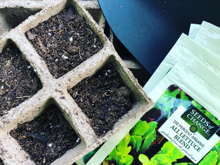 Got the Gardening Bug? Here's How to Start Seeds for a Fall Garden.