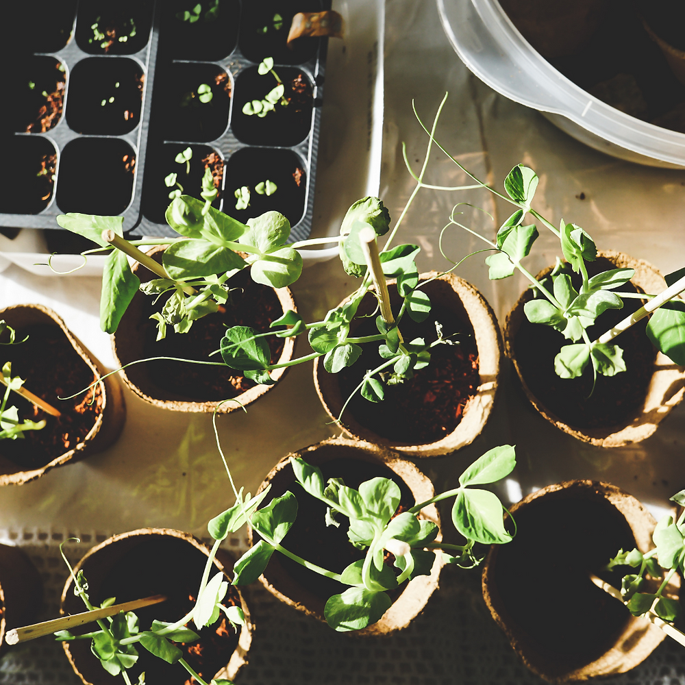 Why Everyone Needs to Garden in 2021