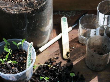 A Sustainable Way to Use Plastic Bottles in Your Garden