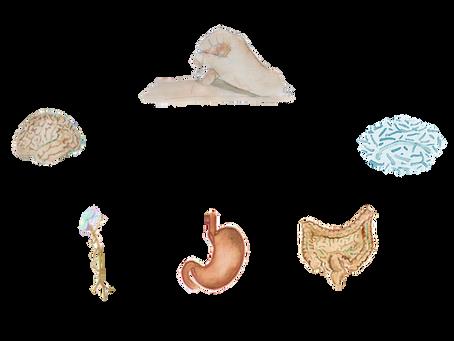 Agopuntura nel trattamento delle patologie gastrointestinali: può essere d'aiuto?