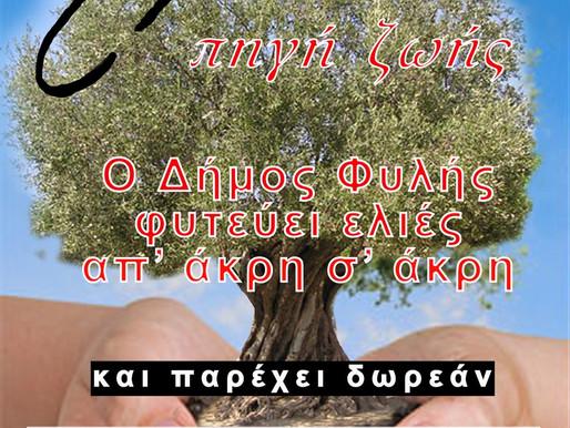 Δωρεάν ελαιόδεντρα για φύτευση προμηθεύει στους δημότες ο Δήμος Φυλής