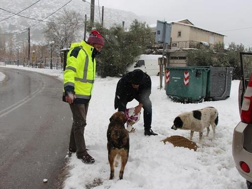 Τάισε τα αδέσποτα  στη Χιονισμένη Χασιά  ο Δήμος  Φυλής