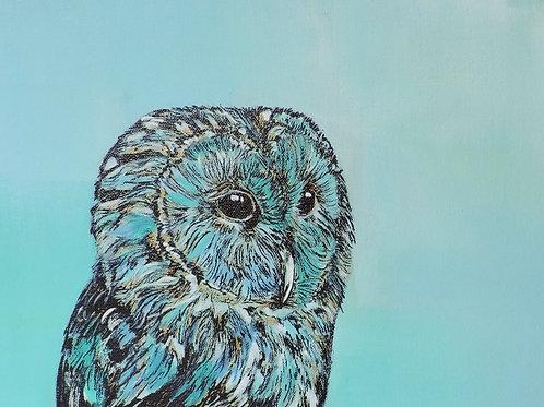 Serene Owl
