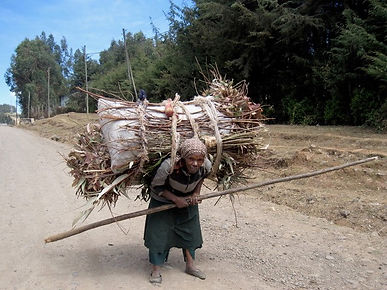 wood carrier not yet ready to retire.jpg