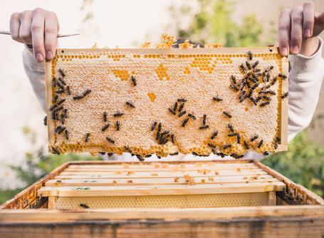 Das Bienenlieb in Salzburg 🐝