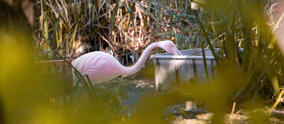Secret Place #4 : Flamingo-Park bei den St. Peter Weihern in Leopoldskron
