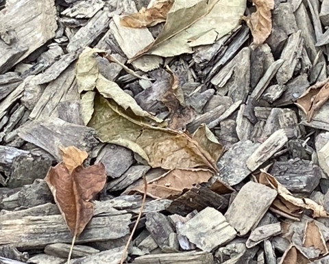 Decomposing Leaves and Bark, or a Composition of Art? It is all a matter of perspective.