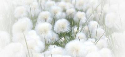 image fleurs.jpg