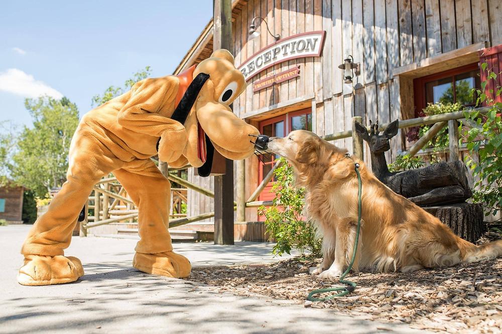 Disney's Davy Crockett Ranch perros en Disneyland Paris