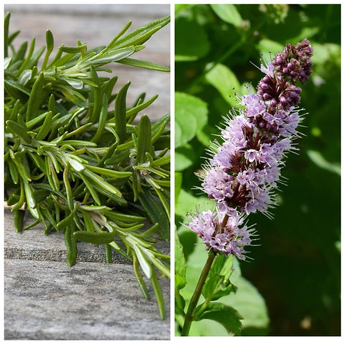 ROSEMARY & PATCHOULI