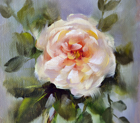 A single Joan Fontaine garden rose