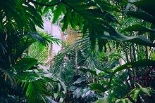 jungleview.jpg