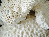 化石サンゴ原石多孔質写真.jpg