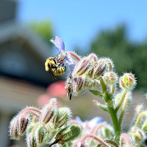 Become a Bee Ambassador!