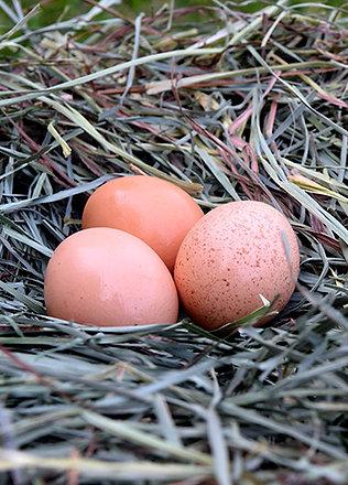 Dozen Chicken Eggs