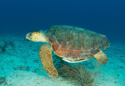 marine science, underwater research