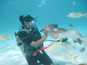 Diver Interacts with Stingray