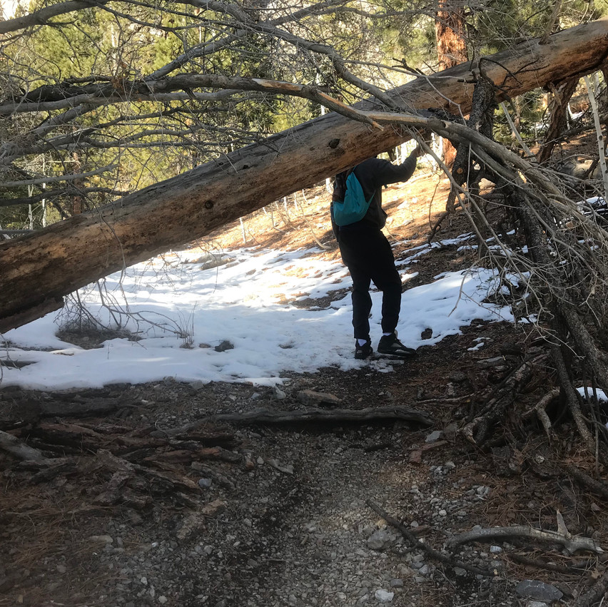Many downed trees like this one line the path we took making for several challenging areas.