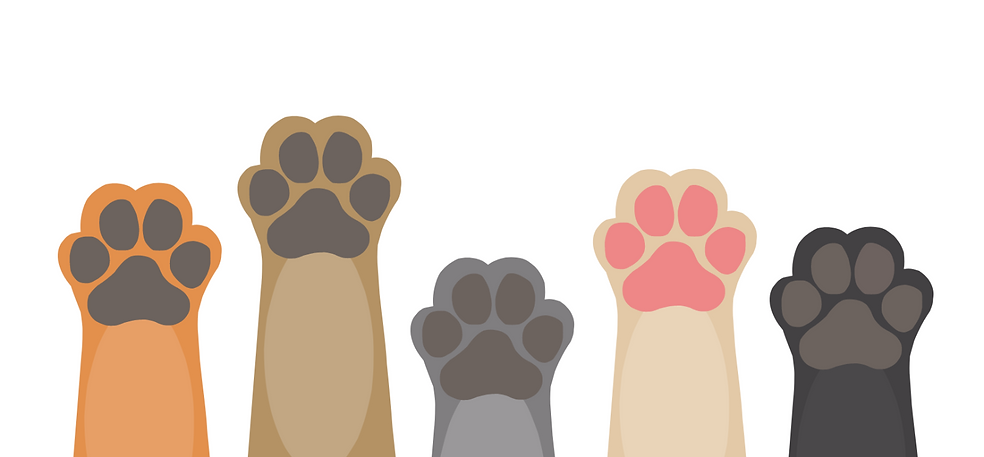pawsup_edited.png