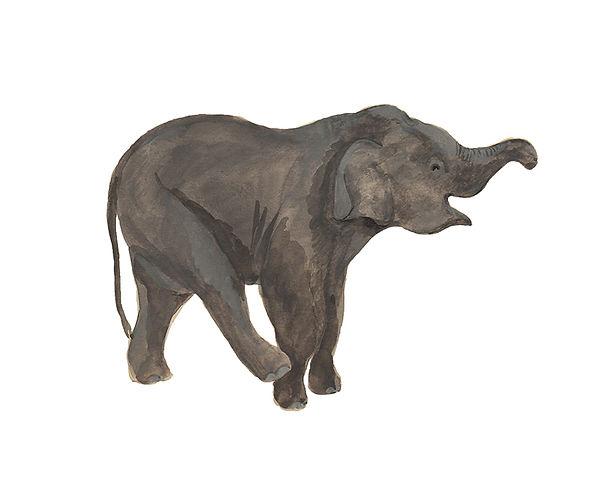 elephant100.jpg