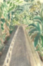 greenhouse path100.jpg