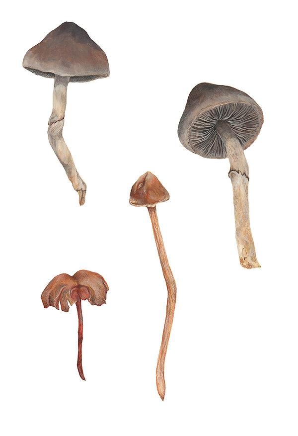 mushroom100.jpg