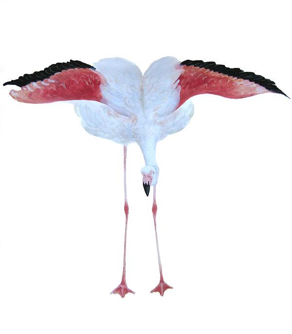 flamingo 3100.jpg