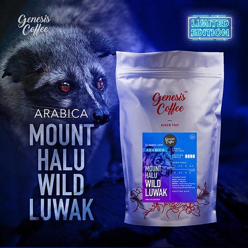Mount Halu Wild Luwak