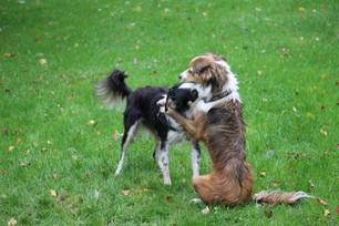 Geschwisterliebe unter Hunden - Erkennen sich die Hunde wieder?
