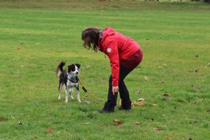 Workshop: Den Hund spielend motivieren