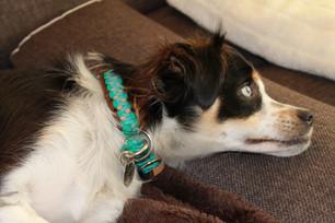 Paracord Halsband und Leine von True Dogz