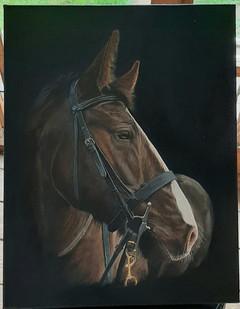 Horse in Oils
