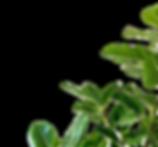 Green%20minimalism_edited.png