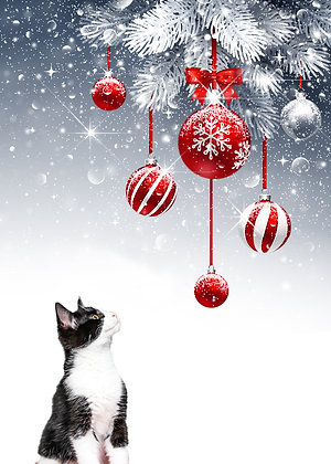 George's Meowy and Bright Holiday