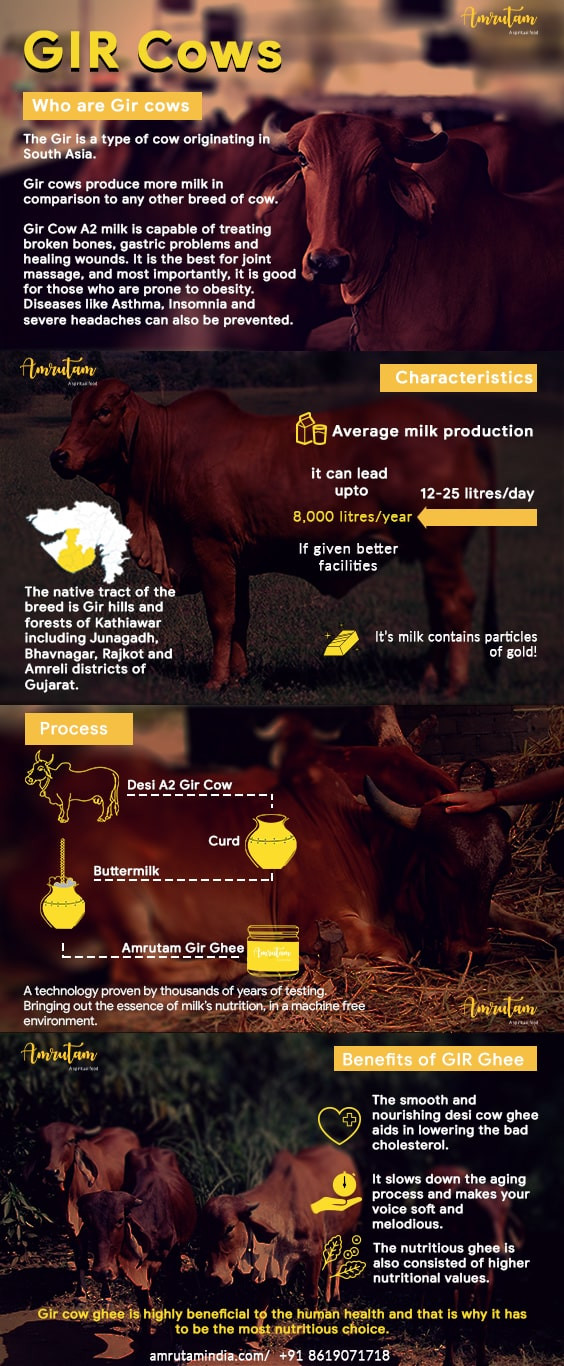 gir-cow-infographic
